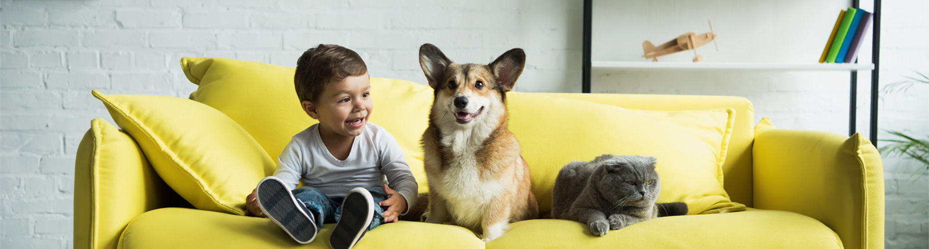 Small boy on a bright yellow couch with a small dog and grey cat