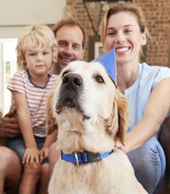 Family with a golden dog wearing a blue collar and a blue birthday hat