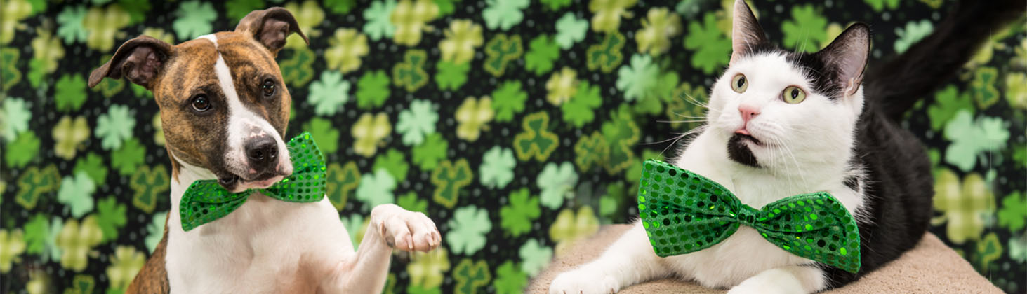 Dog and cat wearing sequins green bows in front of shamrock background