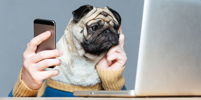 Pug dog with man hands using laptop and cell phone
