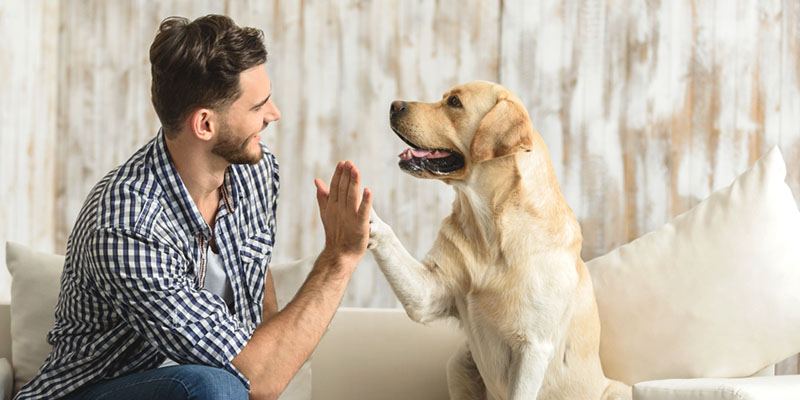 happy guy sitting on a sofa and looking at dog while his hand touches the dog paw